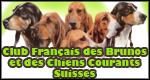 Club Francais des Brunos et des Chiens Courants Suisses