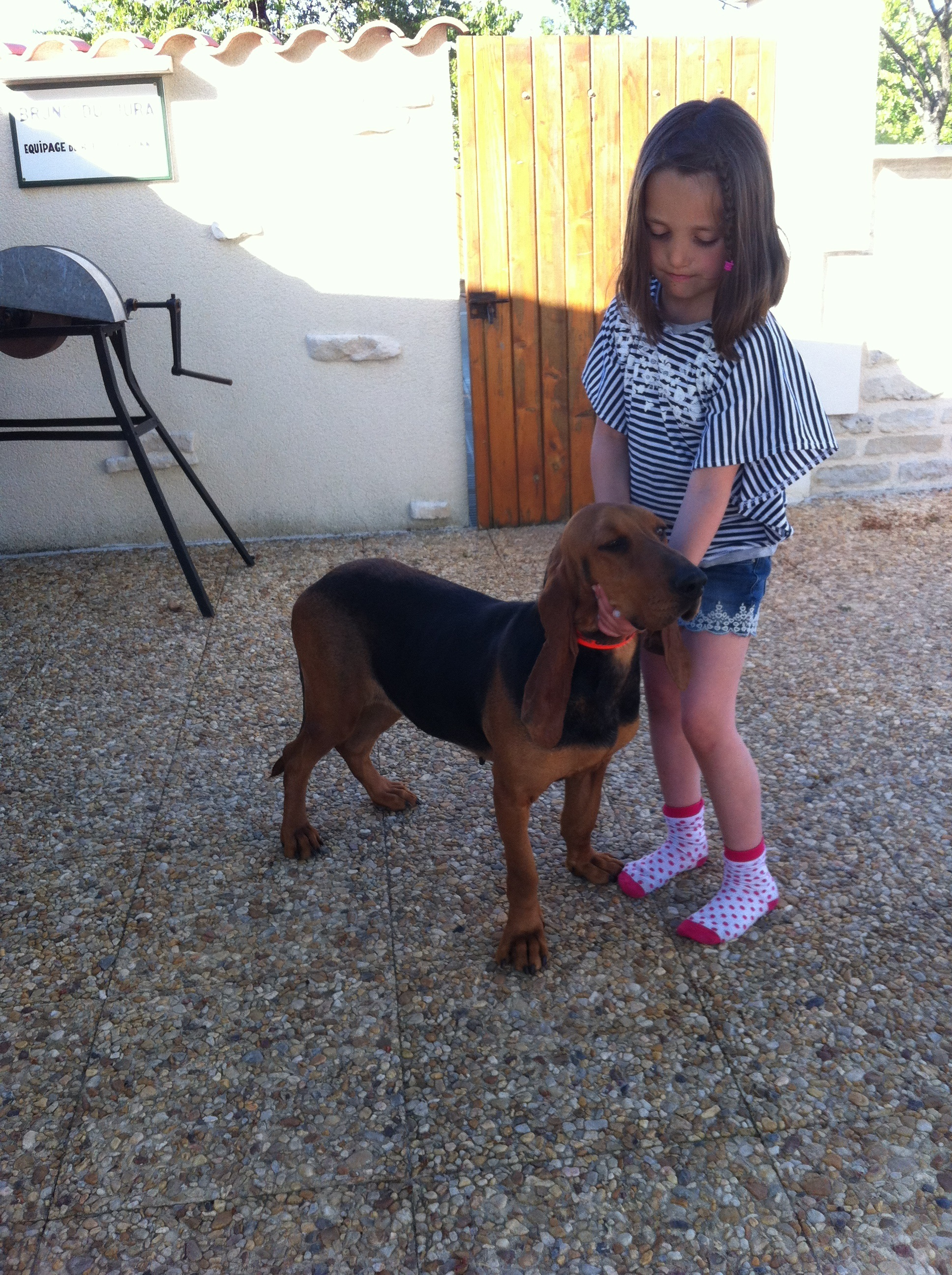 Rencontre animaux saillie